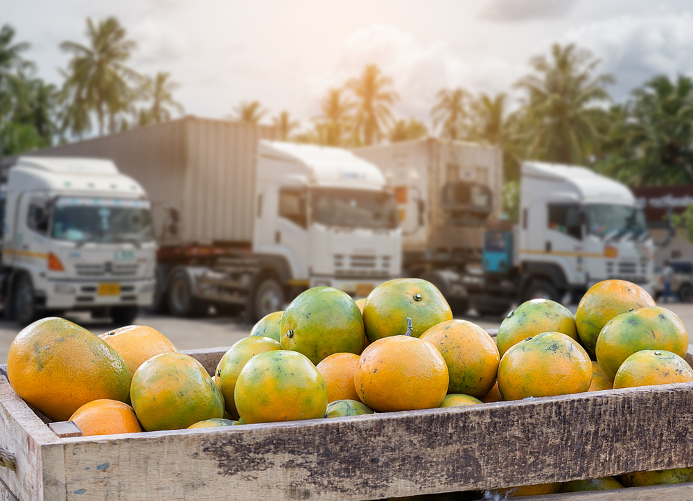 Create of oranges ready for transportation